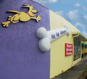 Dog Daycare in Orlando FL post image